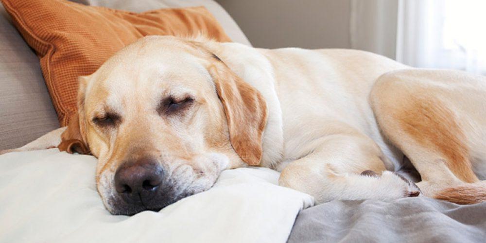 hotel-4-zampe-che-accettano-cani-4151201803